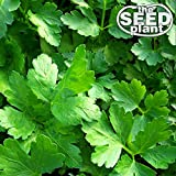 Plain Italian Parsley Seeds - 600 SEEDS NON-GMO