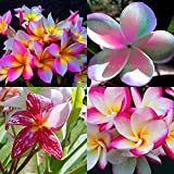 """""""MIXED 4 CUTTING """" FRAGRANT PLUMERIA'S CUTTING WITH ROOTED 7-12 INCHES REGISTERED TRACK ONLINE 100%GUARANTEE SATISFICATION AND ..."""