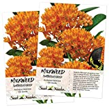 Seed Needs, Butterfly Milkweed (Asclepias tuberosa) Twin Pack of 100 Seeds Each