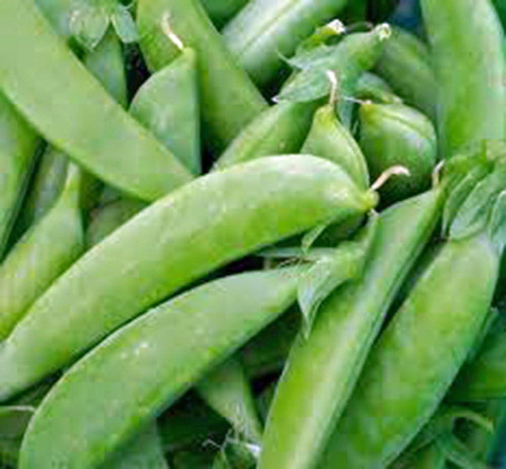 Amazon Com Pea Seed Sugar Snap Pea Heirloom Non Gmo 20 Seeds Perfect Peas Country Creek Acres Garden Outdoor