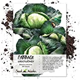 Seed Needs, Early Flat Dutch Cabbage (Brassica oleracea) 300 Seeds Non-GMO