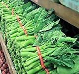 Chinese Broccoli, Kailan Gai Lan Seeds - Most Popular vegetable in Cantonese Cuisine - Approx. 60-65 Days - By MySeeds.Co (0200 Seeds - Pkt. Size)