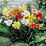 Tiger Lily Mix - 3 flower bulbs
