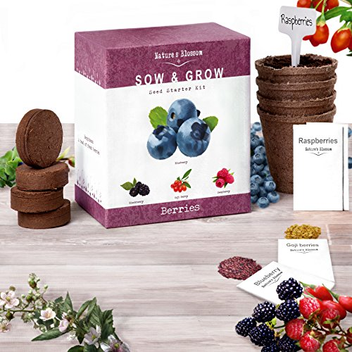 Nature S Blossom Fruit Growing Kit Grow 4 Types Of Berries From