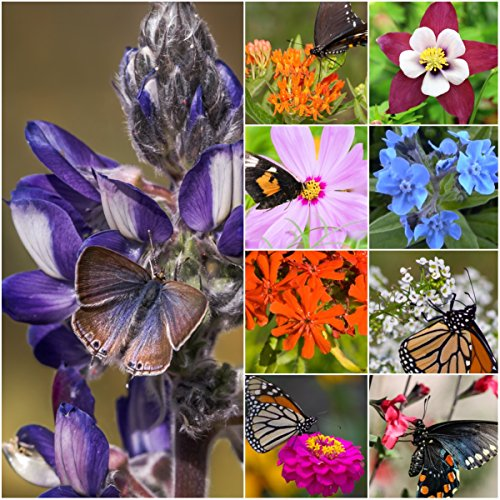 Package of 30,000 Seeds, Bird and Butterfly Wildflower Mixture (100% Pure Live Seed) Non-GMO Seeds by Seed Needs ...