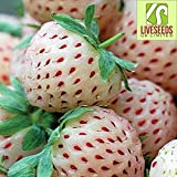 Liveseeds - Pineberry White Strawberry 20 seeds HIGH Yield