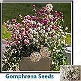 ChinaMarket Gomphrena Seeds Pink Purple white Bonsai Flower seeds 100seeds/bag