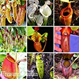 Hot Sale!Nepenthes Seeds Balcony Potted Bonsai Plants Seeds Bonsai Carnivorous Plants Seeds 50 Seeds/pack,#V44I91