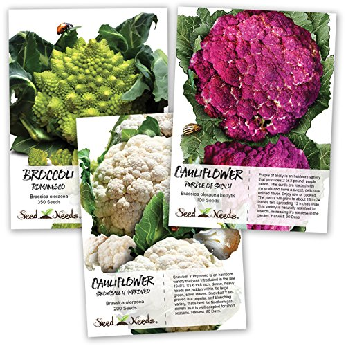 Seed Needs, Cauliflower Seed Collection (Romanesco, Purple of Sicily & Snowball Y Improved) Non-GMO