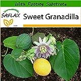 SAFLAX - Sweet Granadilla - 20 Seeds - with Soil - Passiflora ligularis