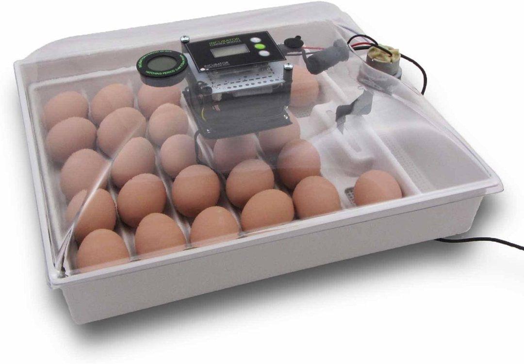 Best Chicken Egg Incubators