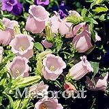 Seeds Shopp Pink Eustoma Grandiflorum Bonsai Seeds 100pcs Lisianthus Flower Seeds Perennial Ornamental Plant Sementes de flores