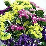 ADB Inc Mix Midnight Statice Limonium Sinuata Seeds Good Cut Flower Evergreen Perennial