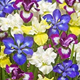 Van Zyverden New & Exclusive - Iris Siberica Speciality Mixture 339  - Set of 5 Roots