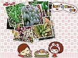 Garden Plant 100% Genuine Lithops schwantesii v. kunjasensis (C248) - 100 Seeds - Living Stones Plant Seeds * Free Shipping Bon