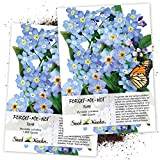 Seed Needs, Blue Forget-Me-Not (Myosotis sylvatica) Twin Pack of 1,000 Seeds Each