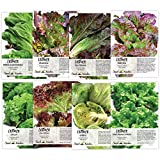 Seed Needs, Lettuce Lovers Seed Collection (8 Individual Packets) Non-GMO Seeds