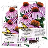Seed Needs, Purple Coneflower (Echinacea purpurea) Twin Pack of 500 Seeds Each