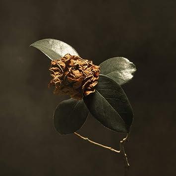 Resultado de imagen de St. Paul & The Broken Bones - Young Sick Camellia