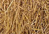 Thunder Acres 100 Percent Natural Wheat Straw (8 lbs.)