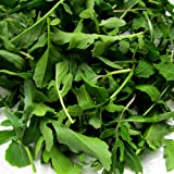 Arugula Seeds ► ORGANIC NON-GMO Heirloom Arugula (Roquette or Rocket) Seeds (100+ seeds)