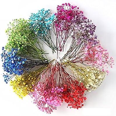 Elegantflower かすみ草 ドライフラワー ちょっとずつ/セット 9色各1g 合計9g