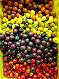 50 Seeds Cherry Tomato Seed (Allsort Mix) Beyond the Basic Red Cherry Tomato- Organic