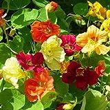 Garden Nasturtium Makhrovaya Mix - 20 Seeds - Organically Grown - NON-GMO