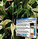 Bloody Dock Seeds (Rumex sanguineus) 40+ Rare Heirloom Herb Seeds + FREE Bonus 6 Variety Seed Pack - a .95 Value! Packed in FROZEN SEED CAPSULES for Growing Seeds Now or Saving Seeds for Years