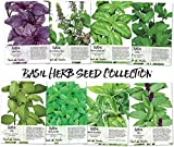 Basil Seed Packet Collection (8 Individual seed Packets) Non-GMO Seeds by Seed Needs