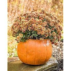 Pumpkin Planter Halloween Stone Pumpkin & Cinderella Jacko'lantern Artificial Gourd Indoor and Outdoor Decor