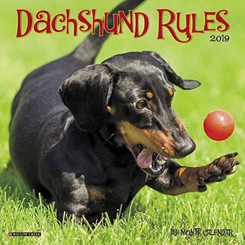 Dachshund Rules Mini 2019 Wall Calendar (Dog Breed Calendar)