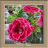 Hot Sale!9 Colors Gloxinia Seeds Perennial Flowering Plants Sinningia Speciosa Bonsai Balcony,100 Seeds/Lot,#4HAQJN