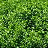 Outsidepride Alfalfa Legume Seed - 5 LBS