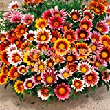 Best Selling!!! flower gazania seeds Outdoor Plants Very Easy Seeds flower Sementes 100 pcs Gazania Seeds