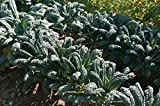 David's Garden Seeds Kale Toscano SL2123 (Green) 500 Non-GMO, Heirloom Seeds