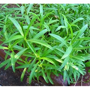 container vegetable garden tips