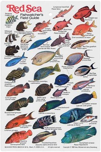 Amazon Com Red Sea Fish Watchers Fish I D Card Sports Outdoors