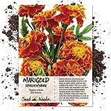 Seed Needs, Sparky Marigold (Tagetes patula) 500 Seeds