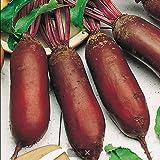 Beetroot Seeds Rival Heirloom Vegetable Beet Seeds