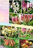 100 TATARIAN HONEYSUCKLE Lonicera tatarica seeds ~special
