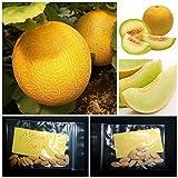 Melon ''Galia'' ~15 Top Quality Seeds - Amazing Sweet Taste and Flavor!