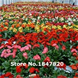2015 Rare Gerbera Seeds, 10 kinds 100 Mix Colors Flower Seeds, High survival Rate for Home and Garden.