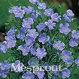 50 Seeds Linum Grandiflorum Seeds Bonsai Plant flower seeds 1 #32713240233ST