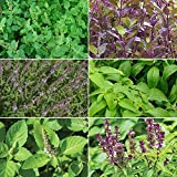 Holy Tulsi Basil Garden Seed Collection Pack - 6 Varieties of Rare Medicinal Herb Seeds! FROZEN SEED CAPSULES - The Very Best in Long-Term Seed Storage - Plant Seeds Now or Save Seeds for Years