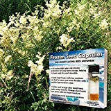 Meadowsweet Seeds (Filipendula ulmaria) 20+ Medicinal Wildflower Seeds + FREE Bonus 6 Variety Seed Pack - a .95 Value! Packed in FROZEN SEED CAPSULES for Growing Seeds Now or Saving Seeds for Years