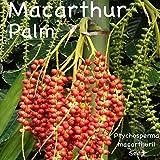 ~Macarthur Palm~ Ptychosperma macarthurii Elegant Clumping Tree 30 Fresh Seeds
