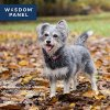 Wisdom Panel Dog DNA Test Kit - Canine Breed Identification and Ancestry Information 6