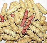 50 Four Grains Red Peanut Plant Organic Vegetable Seeds ~Chris's garden