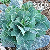 Georgia Southern Collard Green Seeds - 500 SEEDS NON-GMO
